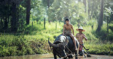 offerte tour Laos