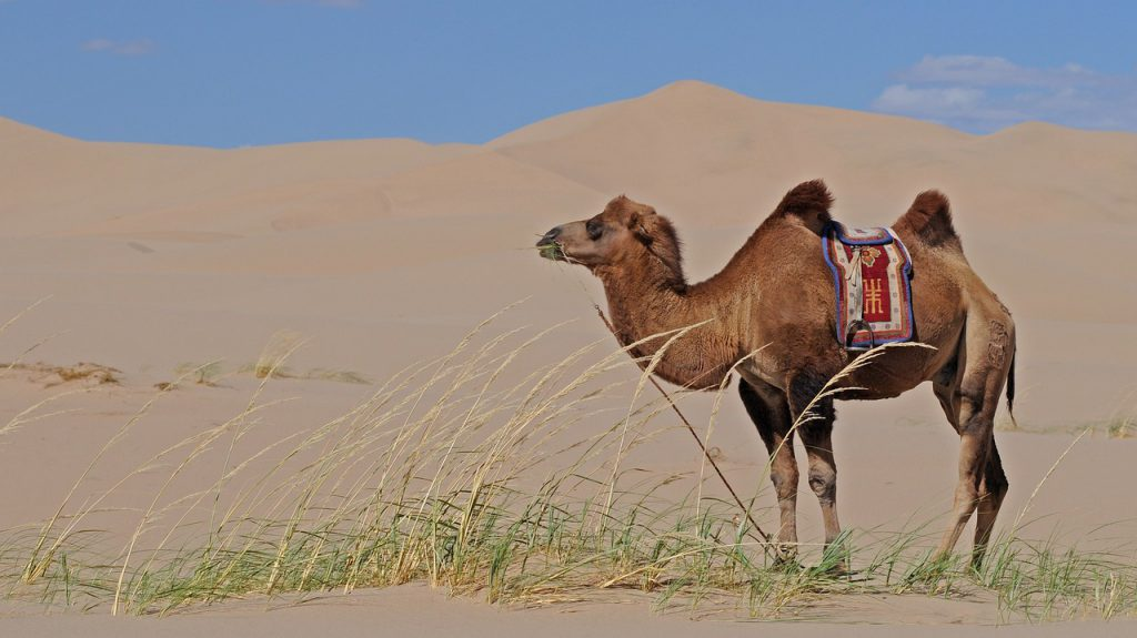 viaggio Mongolia info