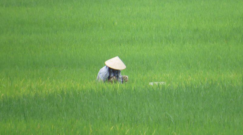 tour low cost Vietnam