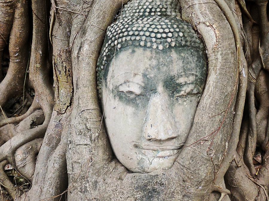 testa Buddha Ayutthaya