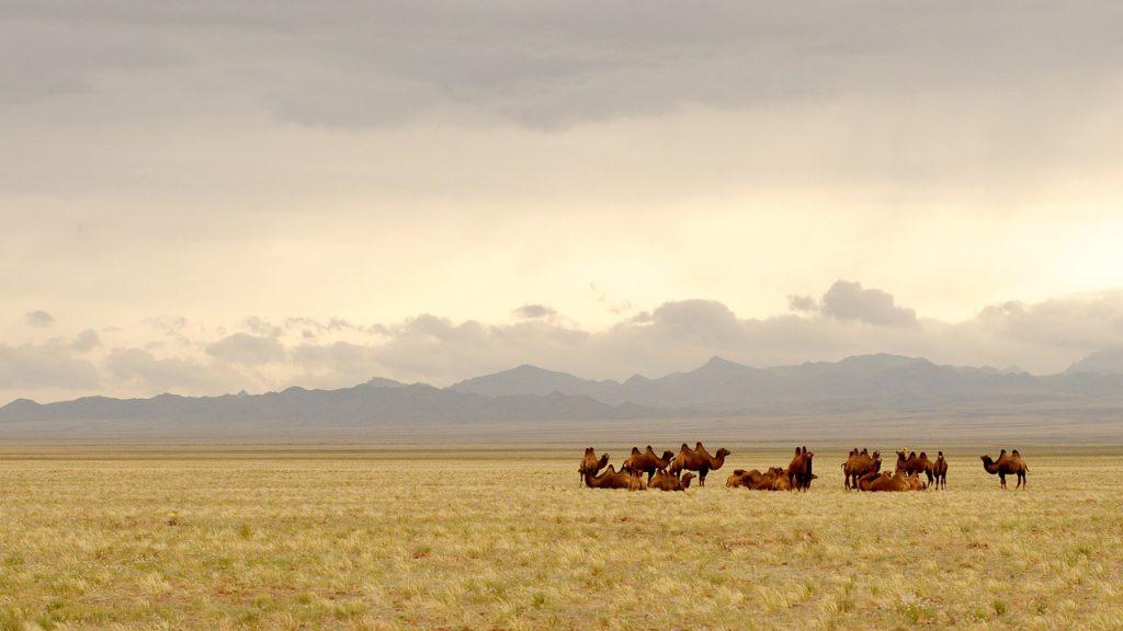 deserto gobi transiberiana