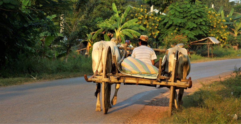 Cambogia insolita rurale